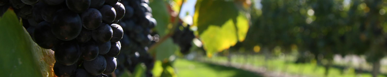 Société vinicole de Bex